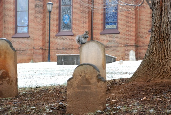 Trinity Church Graveyard with squirrel on tombstone